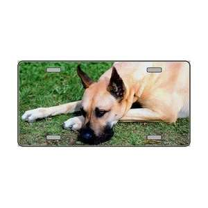 Great Dane Dog Pet Novelty License Plates Full Color Photography