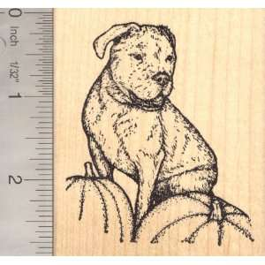 Olde English Bulldogge, (Lady Ghost Rider) Dog Rubber Stamp, With